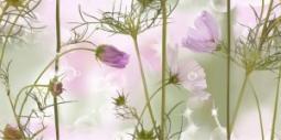 Декор Нефрит-керамика Эльза 04-01-1-10-05-85-168-3 50x25 Розовый