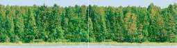Панно Ceradim Forest Dec Forest Panno 25x90